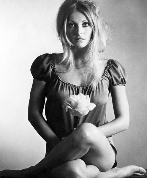 美国好莱坞女星 20世纪60年代著名女演员莎朗·塔特简介