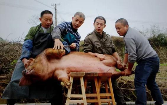 史前的猪有多厉害?为什么4000万猪没有灭绝?