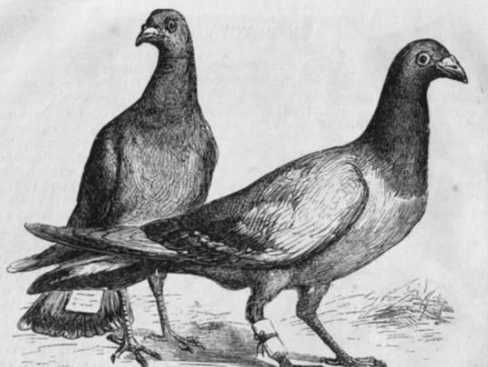 古人利用飞鸽传书,飞鸽是怎么确定位置的呢?