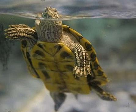 古代水井中为何会放乌龟呢 这乌龟到底是用来干嘛的