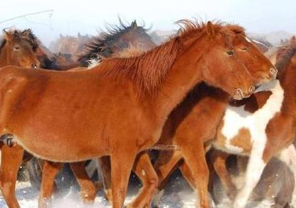 蒙古骑兵的伙食到底是什么样的 他们都吃些什么