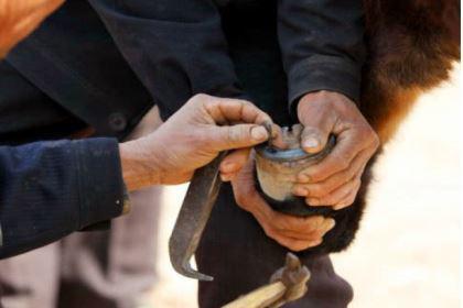 古代战马为何要钉铁掌?背后有什么原因?