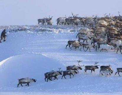 当初的西伯利亚就像白给的一样 为什么清朝没有向此地扩张呢